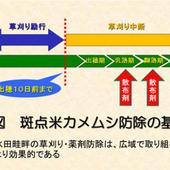 斑点米カメムシ防除の基本